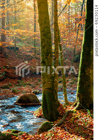 trees on the bank on the mountain river. forest stream among the 69230114