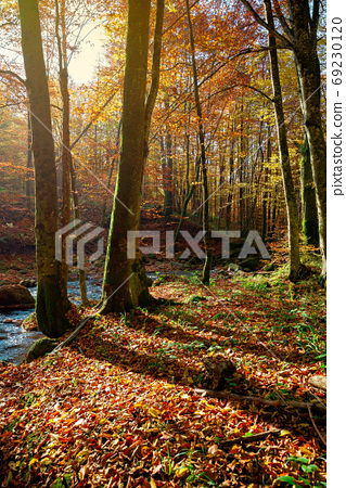trees on the bank on the mountain river. forest stream among the 69230120