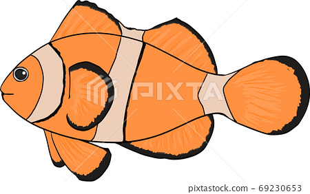 Cute hand drawn anemone fish illustration 69230653