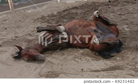 Horse 69231482