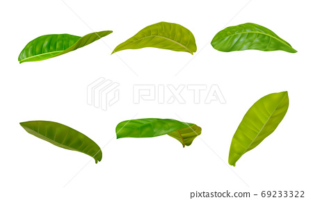 Realistic leaves sets in different postures on a white background. Realistic EPS file. 69233322