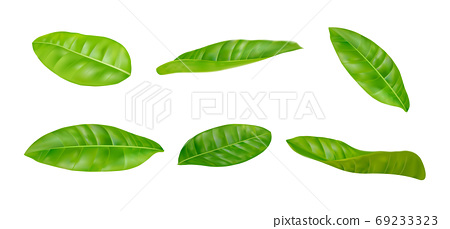 Leaves sets in different postures on a white background. Realistic EPS file 69233323