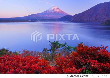 Mt. Fuji in the evening sun seen from the azaleas that turned red in Lake Motosu at dusk 69272666