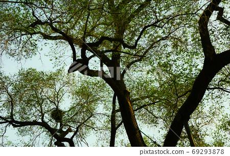 나무 69293878