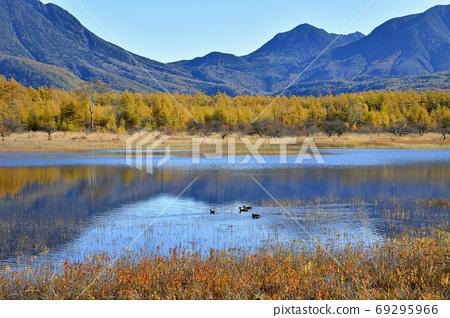 Autumn leaves in Odashirogahara, where water accumulates, and mountains in Okunikko 69295966