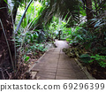 Palm forest track in rainy season with sunshine, Thailand. 69296399