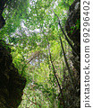 vertical photo of uprisen angle view of green leaves trees and c 69296402