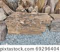 piece of brown petrified wood on the ground in Thailand 69296404