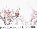 河津櫻花和mezzo 69298882