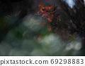 秋天的葉子(秋天圖像) 69298883