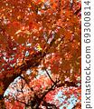 美麗閃亮的秋葉 69300814