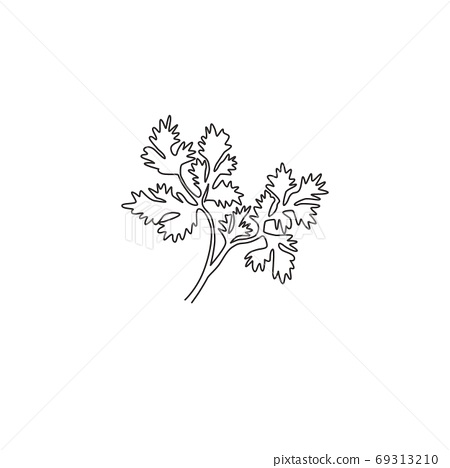 One continuous line drawing of healthy organic coriander leaf for farm logo identity 69313210