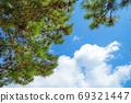 在夏日的天空中漂浮的雲層和松針 69321447