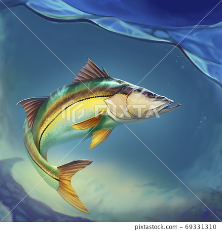 Snook Common Fish Mounts on water at depth realistic illustration. 69331310