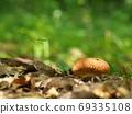 Mushrooms that look delicious 69335108