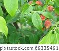 Fruit of the Row Bai 69335491