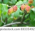 Fruit of the Row Bai 69335492