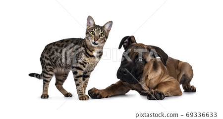Cat and dog on white background 69336633