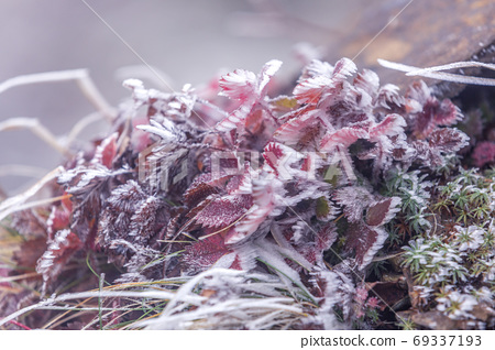 霜花与霜在强风中生长 69337193