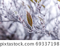 Frost covered leaves 69337198