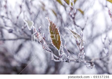 霜覆盖的叶子 69337198