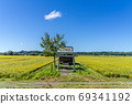 A shrine in a rice field with colored rice ears 69341192