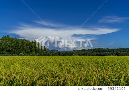 夏山的稻穗被染成彩色的里山 69341193