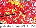 Postcard-like background material with bright autumn leaves 69348159