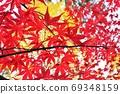 明亮的秋葉,明信片般的背景材料 69348159