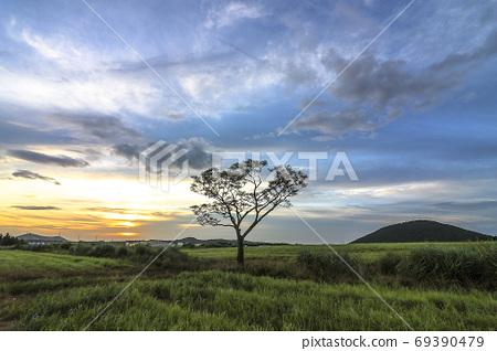 제주 나홀로 나무 69390479