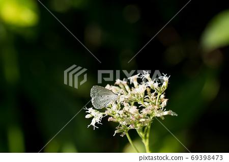 大和志美栖息在一朵白花 69398473