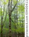 織田原的原始森林 69400411