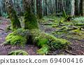 生苔的北八岳森林 69400416