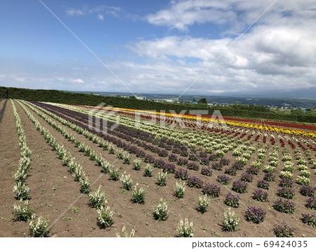 후라노의 꽃밭 69424035