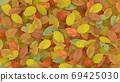 깔린 낙엽 69425030