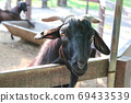 Black goat is on a farm. 69433539
