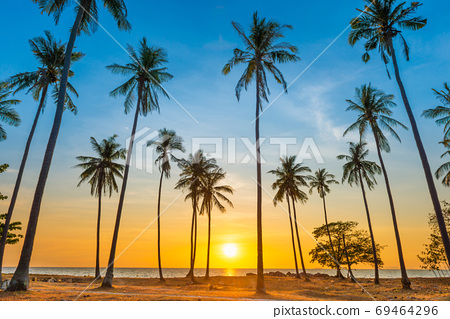 Sunset with palm trees on beach 69464296