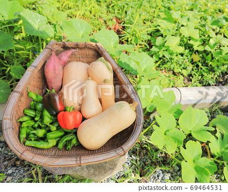 Harvest of home garden 69464531