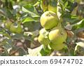 Fresh green apple background. Closeup of a bunch of bio organic green apples. 69474702