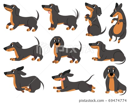Dachshund. Cute dogs characters various poses hunting breed, design for prints, textile or card, adorable dachshund cartoon vector set 69474774