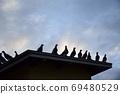 새벽 鳩舎 鳩舎 지붕에 집결 비상 전에 비둘기들 69480529