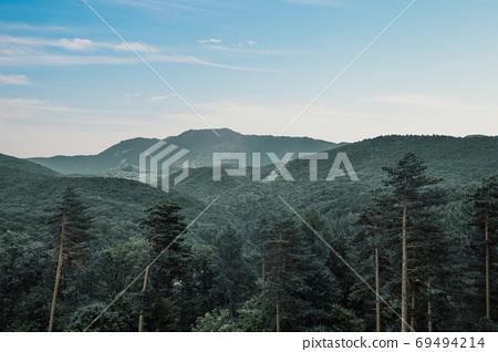 Green trees forest mountains in Rasnov, Romania 69494214