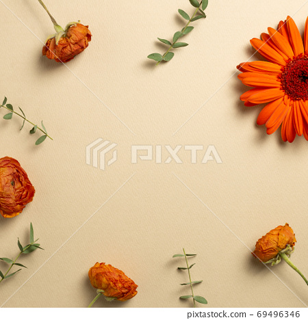 Autumn concept. Orange ranunculus and gerbera daisy flowers with eucalyptus leaves on beige background. flat lay, top view, copy space 69496346