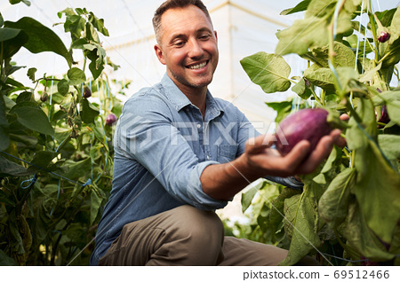 Man in greenhouse holding eggplant 69512466