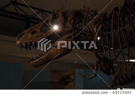 悲傷的恐龍 69515995