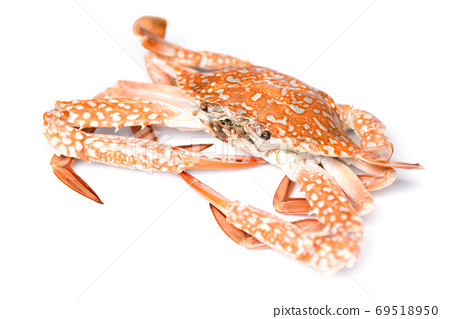 Crab isolated on white background - Seafood shellfish steamed bl 69518950