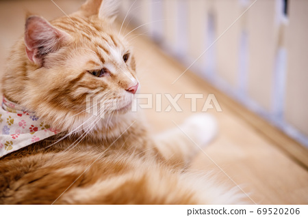 Cute tabby cat with yellow eyes and long whiskers. 69520206