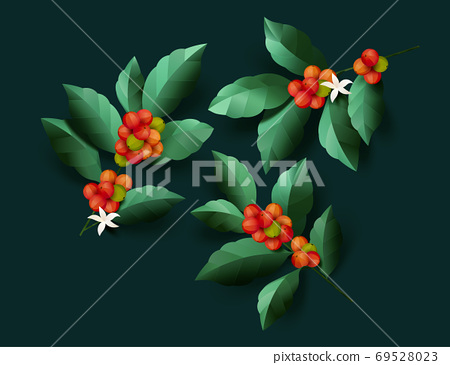 Ripe coffee cherries with leaves 69528023