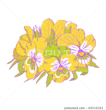Hand drawn yellow pansy flowers clipart. Floral design element. Isolated on white background. Vector 69528381