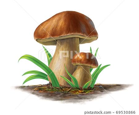 Porcini mushrooms 69530866